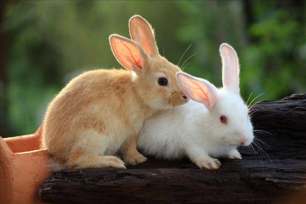 71——萌宠分享[超级可爱的小白兔]